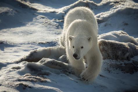 Approaching Bear.jpg