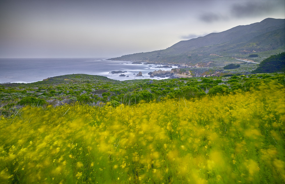Flowering Mustard, Hurricane Point.jpg