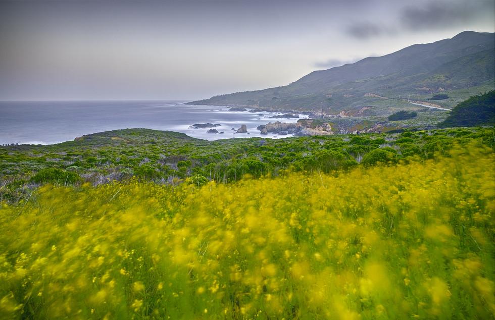 Flowering Mustard, Hurricane Point.jpg