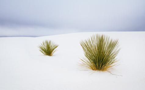 Desert Life.jpg