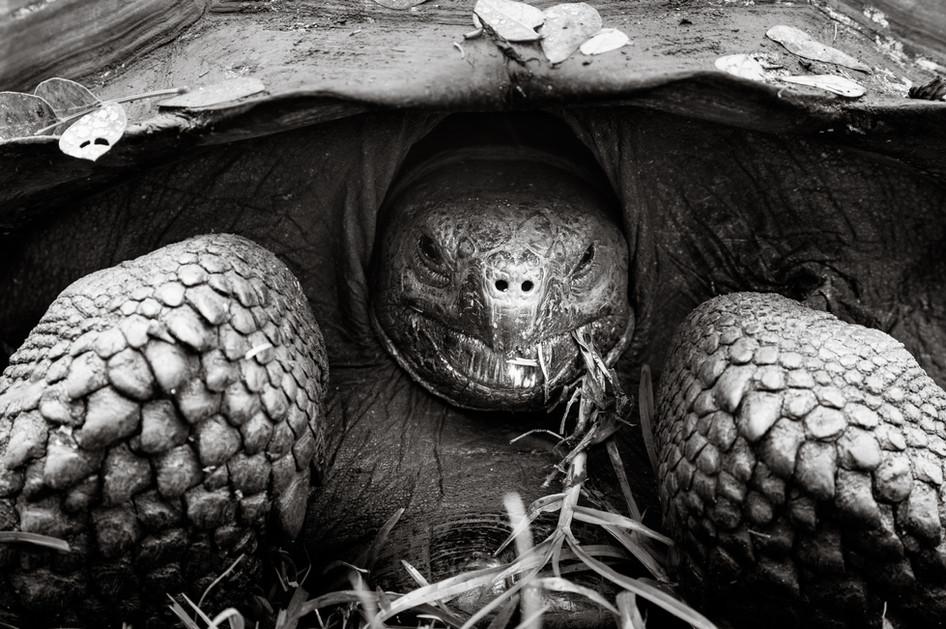 Hiding Tortoise.jpg