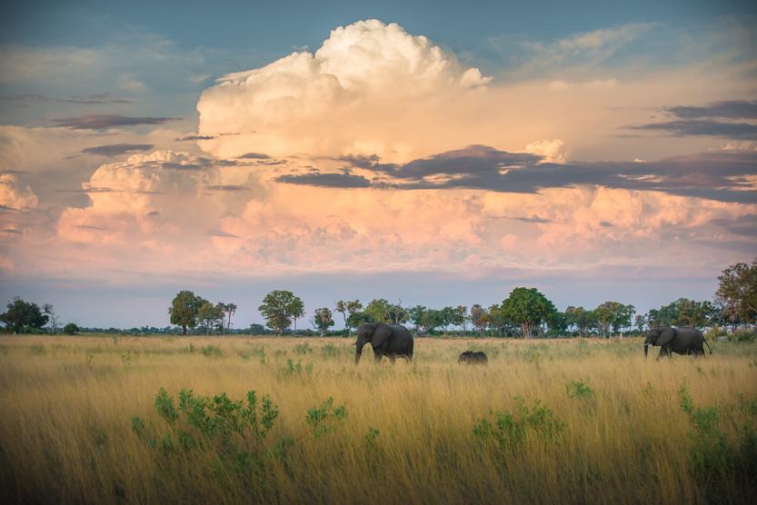 Elephants Under a Painted Sky.jpg