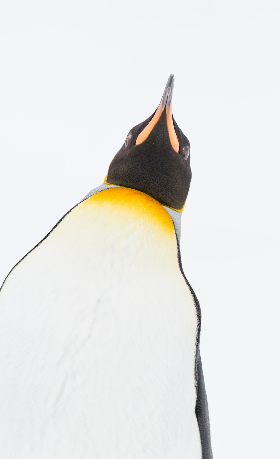 Domineering Penguin.jpg