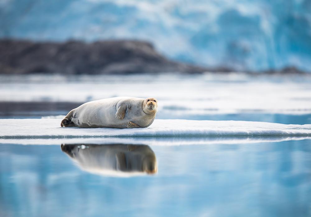 a seal on an ice floe
