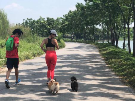 """Đã có gần 200 cặp đôi chủ và cún đăng kí tham dự sự kiện """"RUN WITH  DOGS"""""""