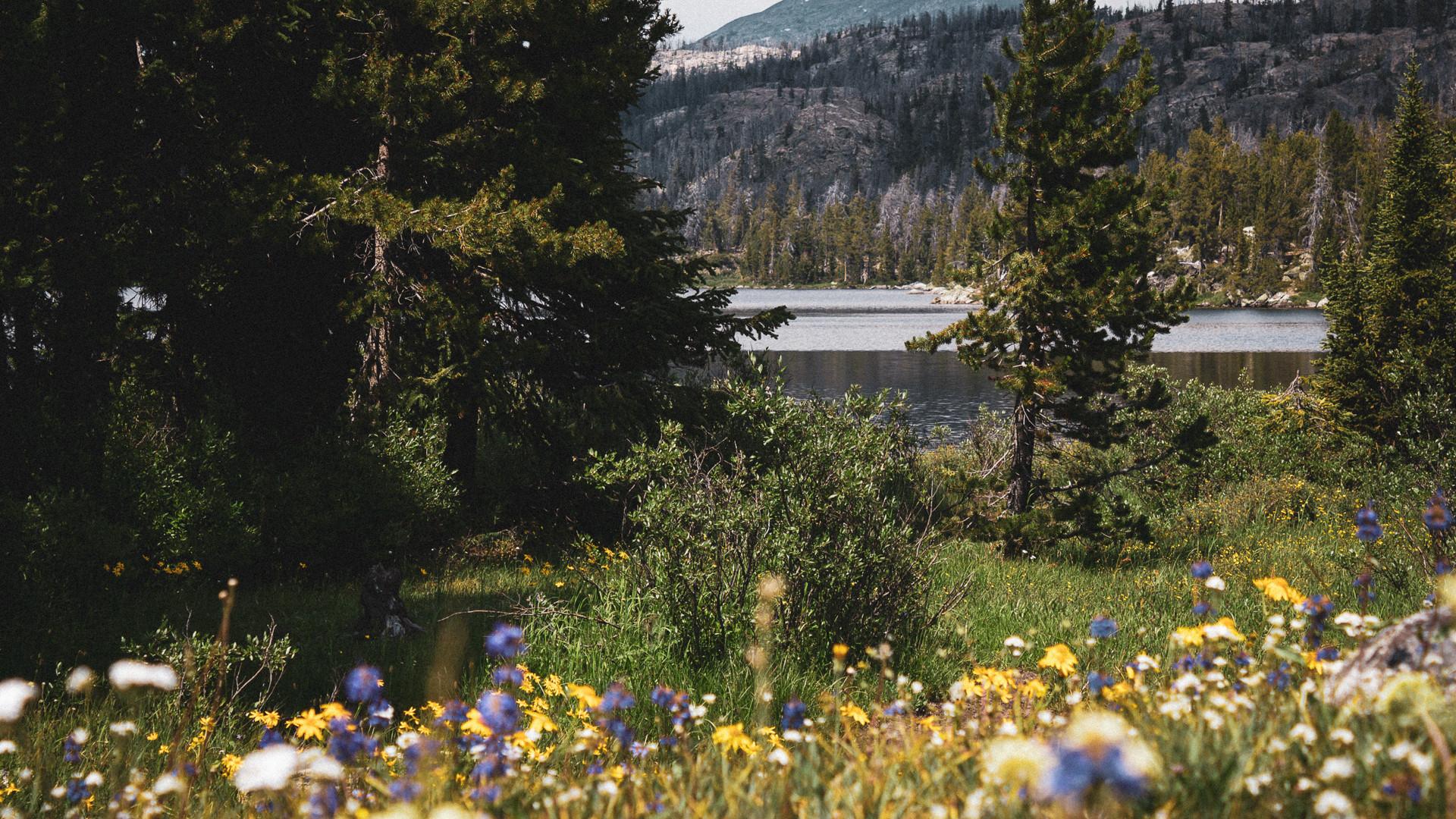 mountainflowers.jpg