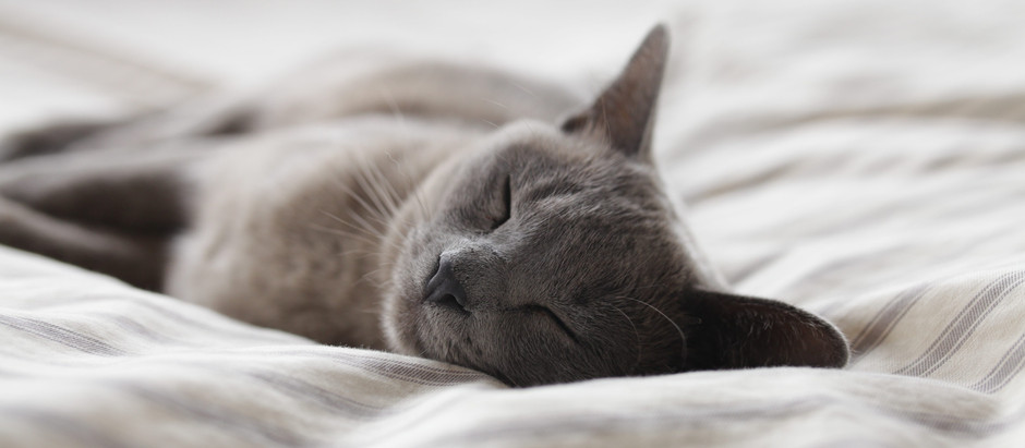 Is sleep the new diet?