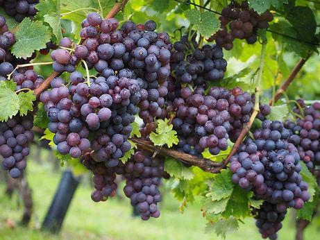 wine-berries-694196_1920.jpg