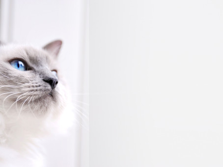 22 reasons why cats stop using their litter boxes