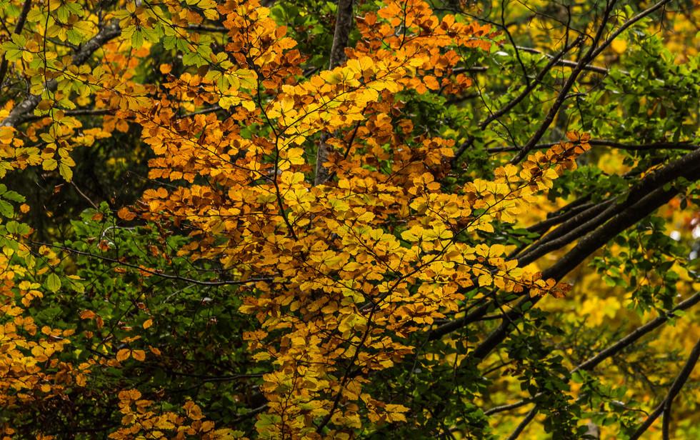 Herbst - beste Jahreszeit!