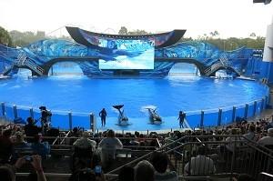 Um apaixonante show no Sea World