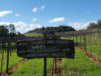 Na vinícola Cainelli, em Bento Gonçalves