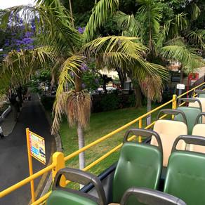 Com a Yellow Bus na Ilha da Madeira