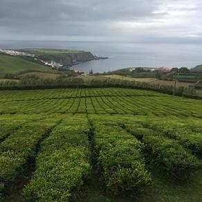Ilha de São Miguel, nos Açores: dez dicas imperdíveis