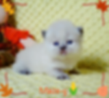 DSC04104 maizy wbs.png