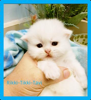 20210107_155600 Rikki-Tikki.png