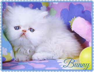 DSC00759bunny_edited.png