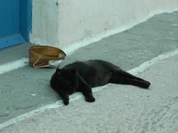 Milos cats