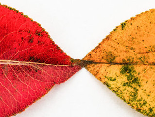Research: To Get People to Embrace Change, Emphasize What Will Stay the Same