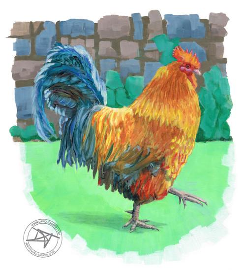 Bridget's chicken