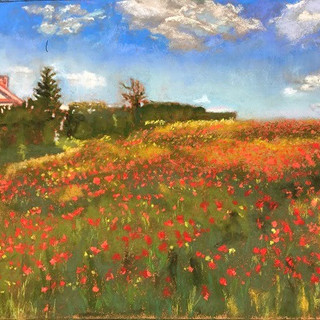 Orgeville Poppies