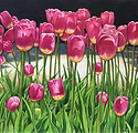 Tulips BencoK.png