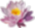 flower-1837409_640.png