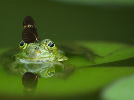 Are you a boiling frog?