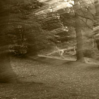 gnw - forest 2 sepia.jpg