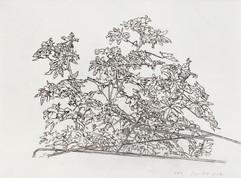 24324, Untitled, 2014, ink on paper, 29x39 cm.jpg