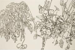 שרון פוליאקין, נרקיסים, 2007, שמן על בד, 200X300 סמ.JPG
