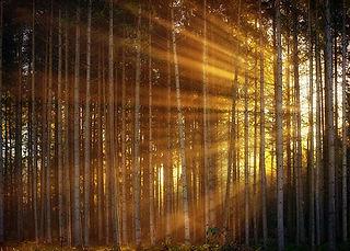 forestlight_Edit.jpg