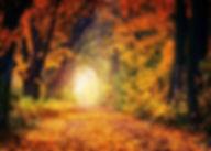 autumnleaves_Edit.jpg