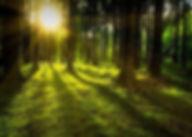nature_Edit.jpg