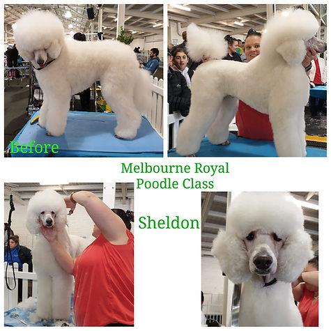 Mackay QLD Dog Groomer; dog grooming Mackay