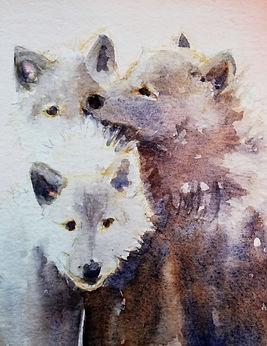 Snow Wolf 5.jpg