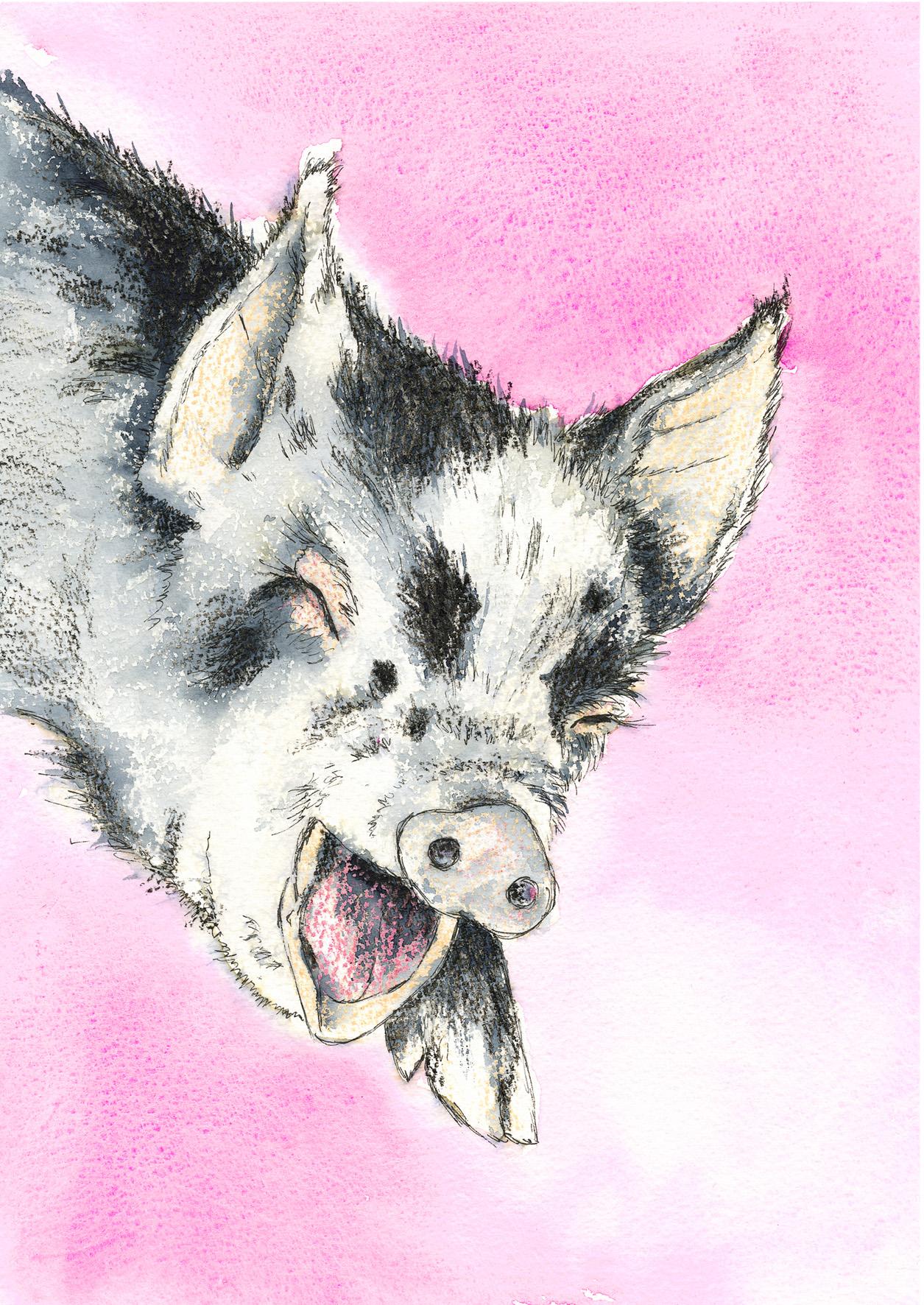 Laughing Piglet