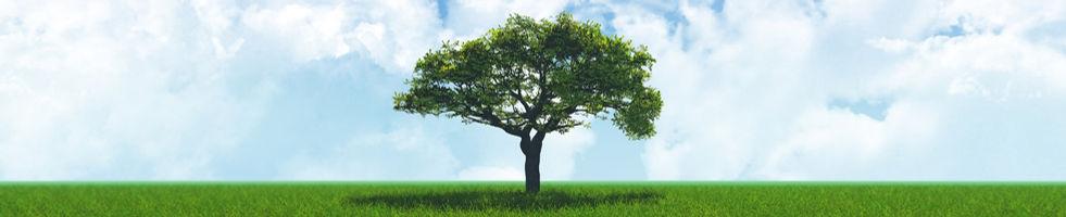 treee.jpg