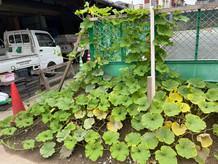 社内菜園です
