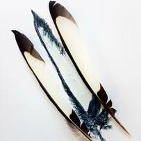 Magpies Whites
