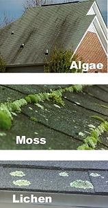 Milton Roof Cleaning