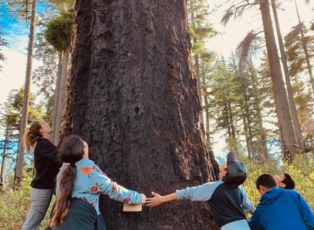 SEL - Hug A Tree Sequence