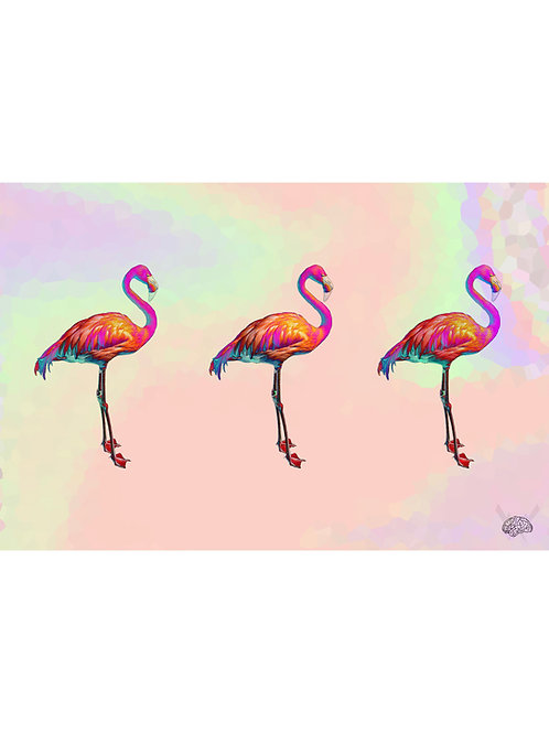 Flamingooo 1