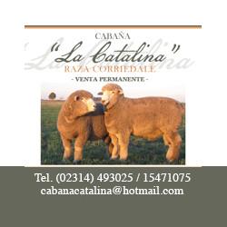 banner_catalina.jpg