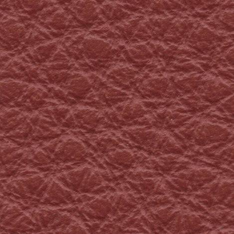 6049 eucalipto