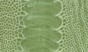 linden green GL