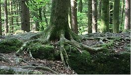 Baum - Tarot.jpg