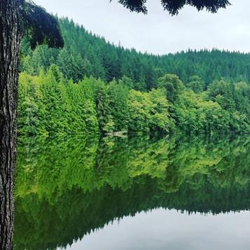 Morning on the lake