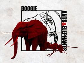 Boogie - Ants & Elephants #MusicMonday