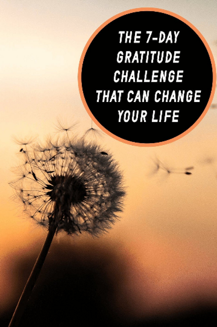 7 Day Gratitude Challenge That Will Change Your Life!